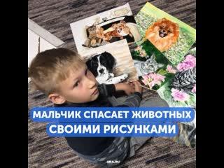 Девятилетний мальчик из Арзамаса обменивает рисунки на лекарства для животных