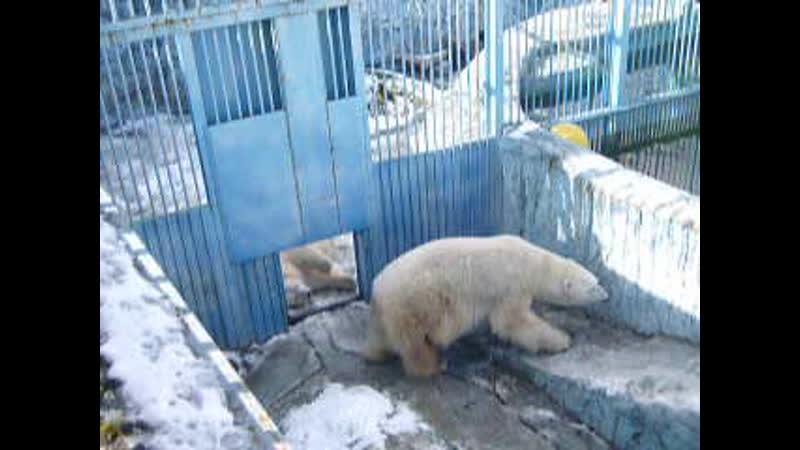 Екатеринбургский зоопарк. Умка и Айна