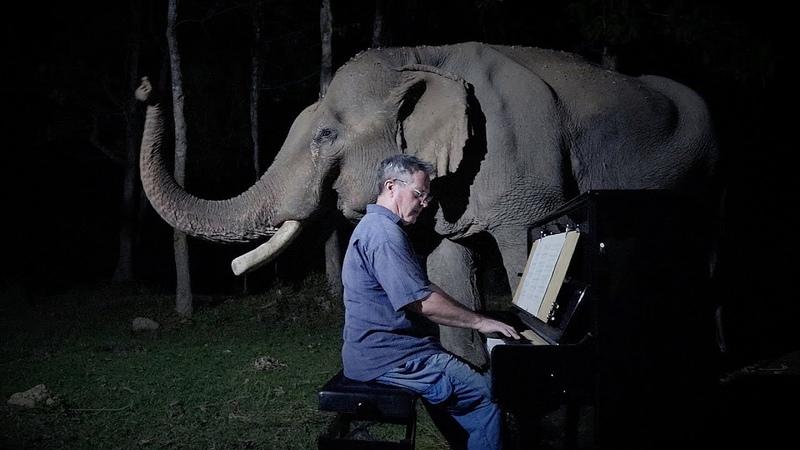 Слоник слушает Бетховена перед сном. Любимая колыбельная. В его жизни было много бед от людей но сейчас он счастлив и окружён заботой. Как хорошо, что в мире есть добрые люди. Пусть это видео несёт добро в этот мир ❤