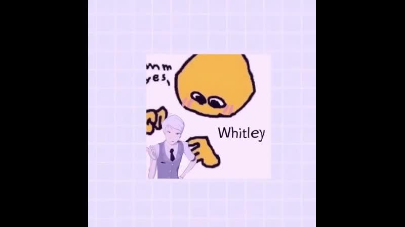 ☆ whitley schnee edit.