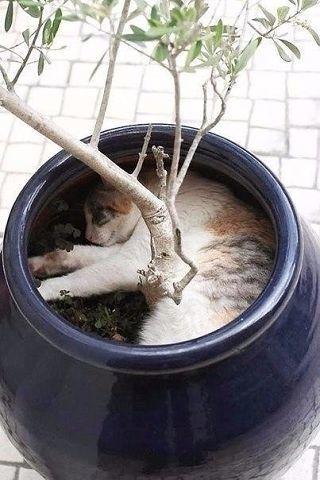 Коты-флористы украсят ваш дом и вашу жизнь (источник: gofazenda)
