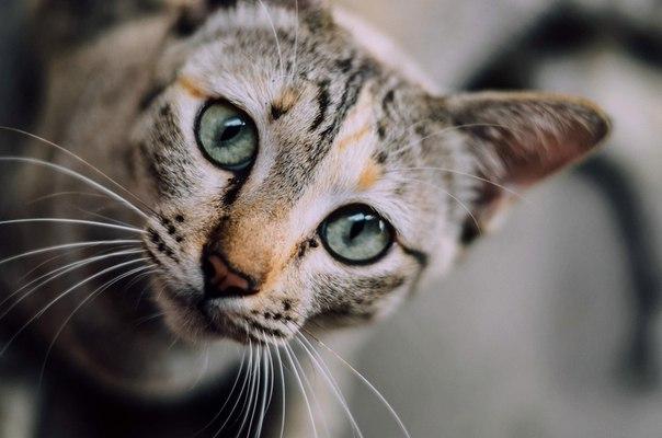 Привет, я кот. И я не простой кот. Не обычный дворовый задира со рваными ушами и тремя поколениями блох. Нет. Я благородный породистый кот. Разрешите представиться, Моисей Второй. Мои предки