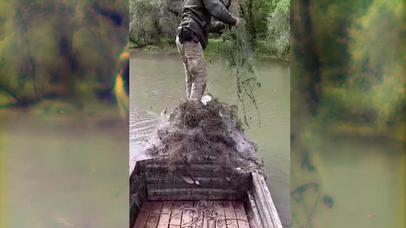 Прикордонники визволяють рибу та раків з браконьєрських тенет
