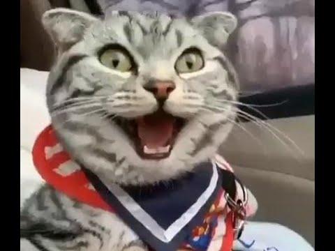 Прикольные кошки и их друзья Смешное видео с котами кошками и собаками