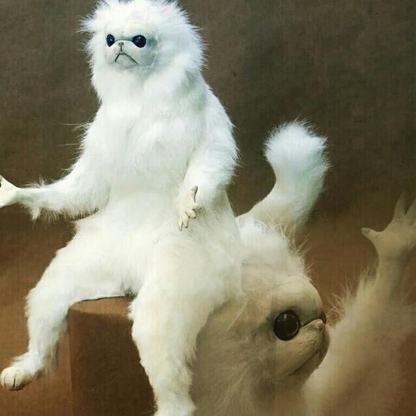 самостоятельно картинка непонимающего кота баловать себя