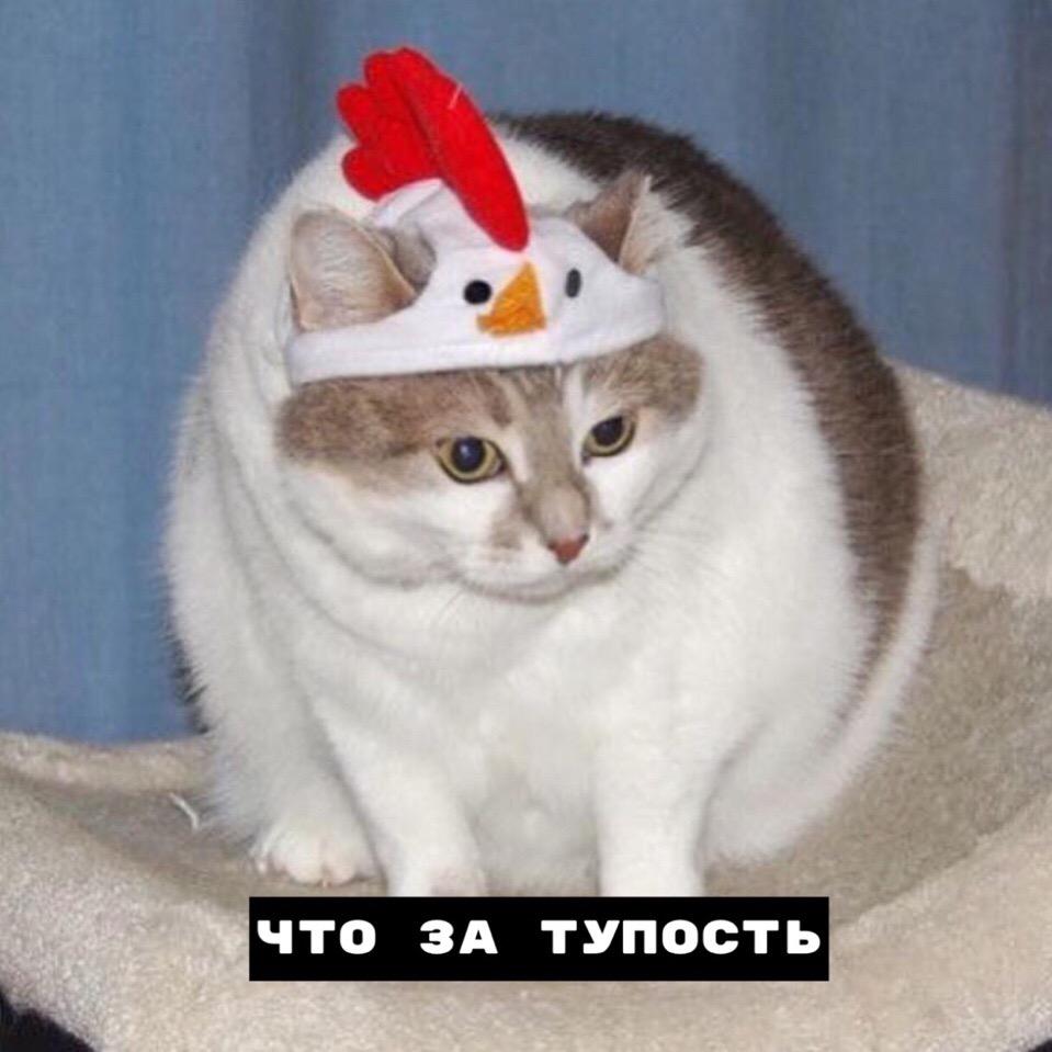 У котиков тоже есть права!