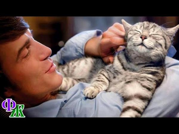 КОТЕНОК ревниво обнюхивал хозяина и сердился - пахло женщиной и ещё другим котом...