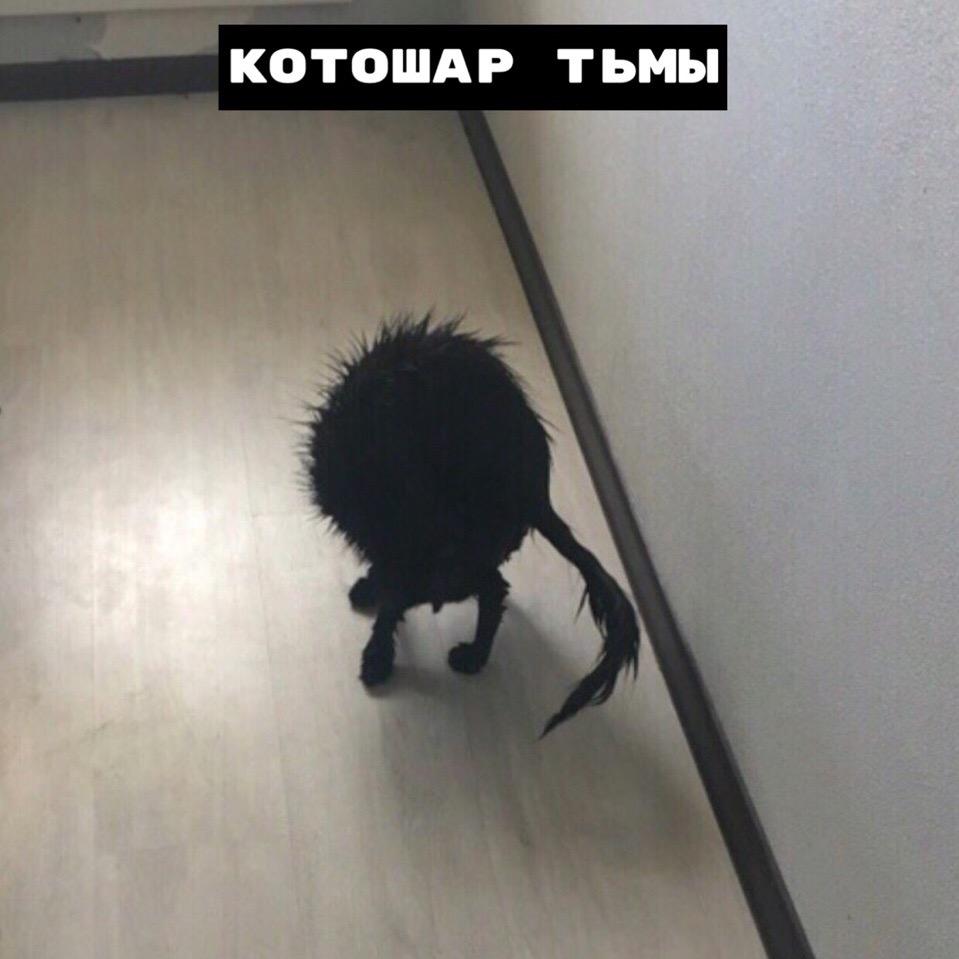 Виды котошаров