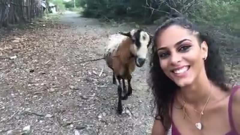 Коза против селфи