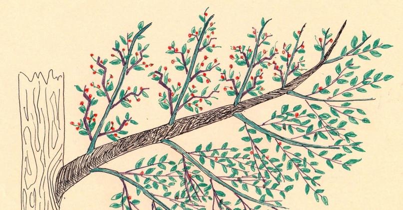 Как сделать Чудо-Дерево, забитое плодами., изображение №1