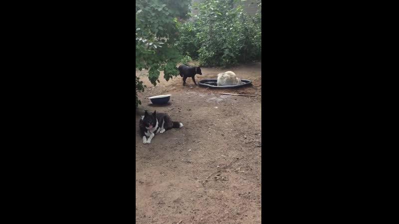 Юкки тестирует новый бассейн