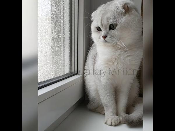 Настроение дождь 💚 Изумруд 💚 Ну когда же ты станешь папой котят? 🤷 Так хочется тискать 🍼