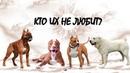 Проблема собак крупных пород. Посмотри перед тем как покупать Ротвейлер, Алабай, Питбуль, Стаффорд
