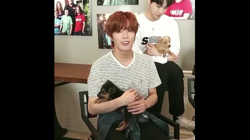 Thinking about how yuta has a dog named rapunzel at home and that he named a puppy he just met during this interview 'cinderella