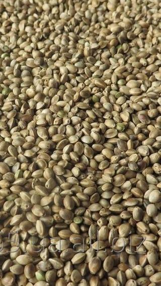 Семена конопли технической лен и ко конопля грибной