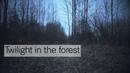 Twilight in the forest / Сумерки в лесу