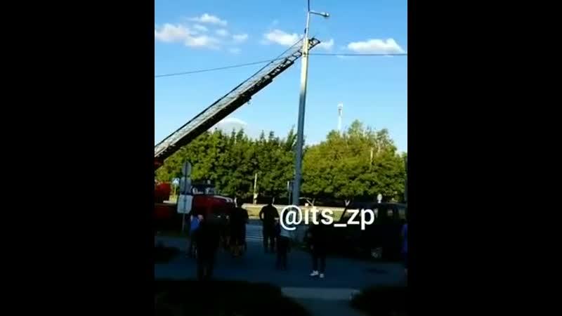 У Запоріжжі врятували галку яка застрягла в опорі вуличного ліхтаря