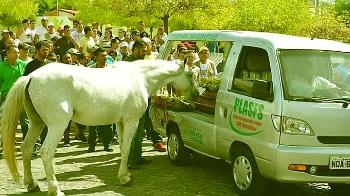 Этот конь пришел на похороны своего хозяина, чтобы попрощаться с ним...