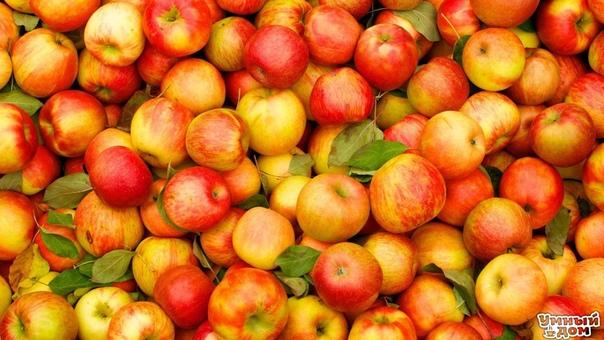 7 причин, по которым нужно есть яблоки