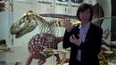 Москвастобой - Онлайн-экскурсия «В мире древних животных»