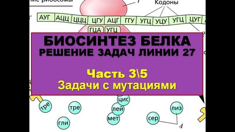 БИОСИНТЕЗ БЕЛКА. РЕШЕНИЕ ЗАДАЧ (3\5 часть - Задачи с мутациями)