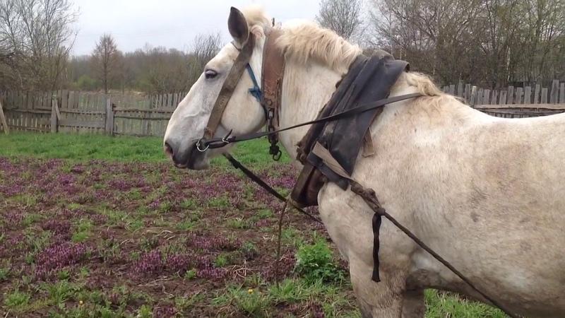 Вспашка огорода лошадью Конь по кличке Орлик