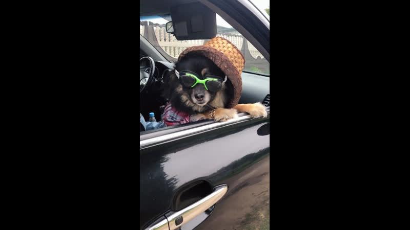 Крутые собачки собака рекомендации тренды