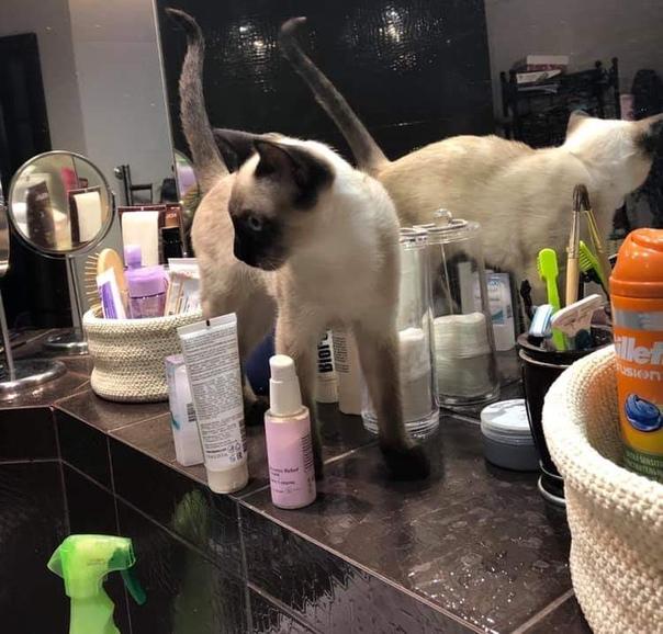 Ирина всё просила и просила меня  на полке в ванной ставить мои бутыльки и тюбики подальше от края