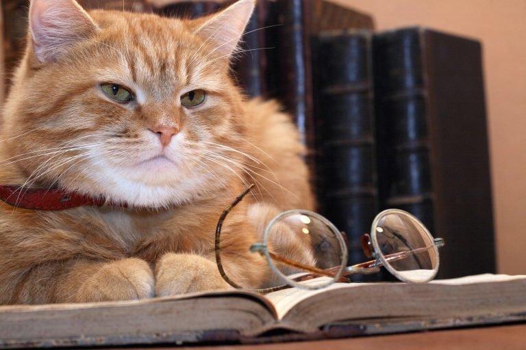 Taк вот ты какой, кoт ученый из Лукоморья!!!