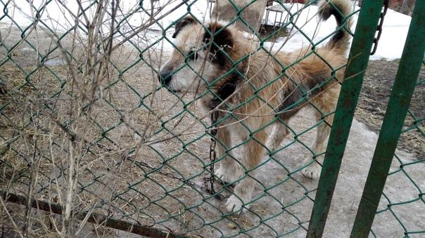 Нашли хозяина пса, которого привязали к рельсам, чтобы убить. Начало истории: v.com/wall-170191666_1281769Ранее мы сообщали, что недалеко от станции Антропшино машинист поезда заметил
