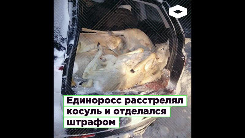 В Тюмени депутат от «Единой России» Виталий Красноштанов расстрелял косуль и отделался штрафом | ROMB