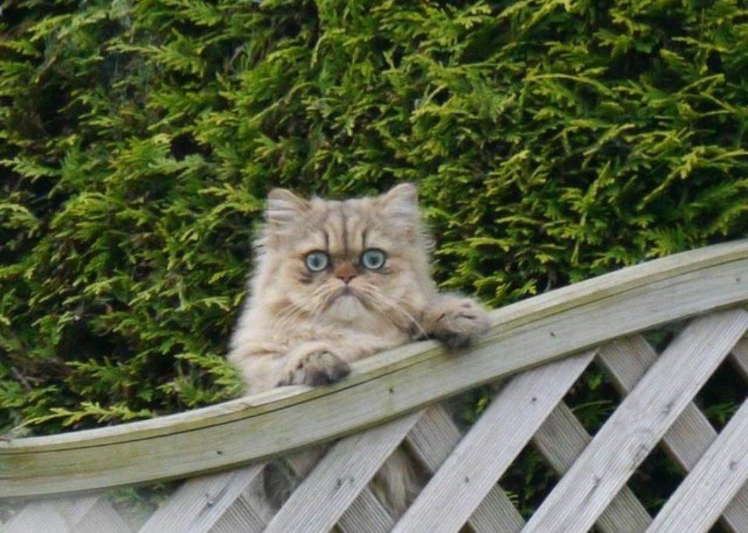 """""""Жaрил ceгодня рыбу-гриль на заднем дворе, краем глаза заметил соседского кота"""""""