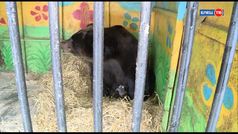 Место рождения Елец В зоопарке Ноев ковчег в крещенские дни родились двое медвежат