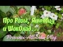 Розы и тля/Дайте дождя,плиз /Омлет на скорую руку а-ля провансаль/provenceallochka vlog