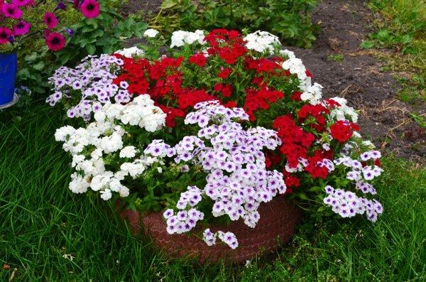 Какие яркие цветы можно посеять семенами в мае сразу на клумбу