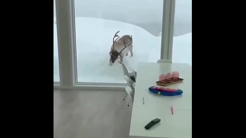 Красота да и только - зимний гость