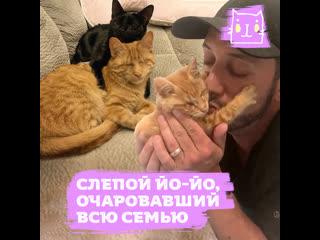 Слепой котенок Йо-Йо