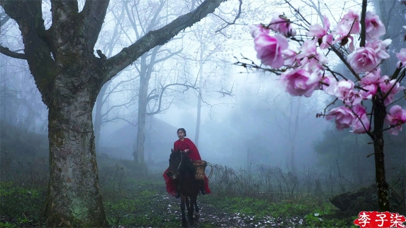Riding a Horse to Find Magnolia Liliflora Blossoms for You 遛马寻花,摘下开得正盛的辛夷给喜欢的你们 Liziqi Channel