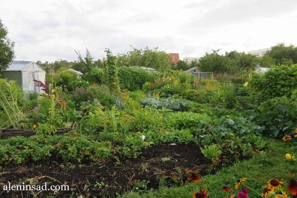 Работы в огороде в августе и сентябре Редис, редьку, руколу, азиатские салаты и кресс-салат можно сеять до сентября; с августа сейте валерьянницу и шпинат, с сентября салат-латук. Кольраби и