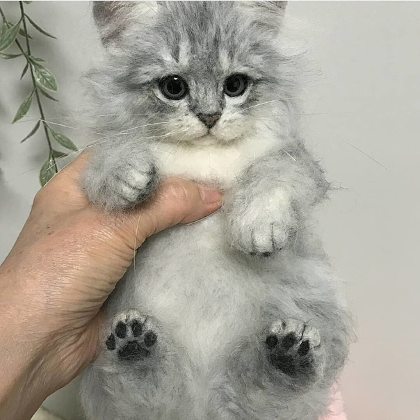 Думаете это настоящий котик А вот и нет Работа талантливого мастера