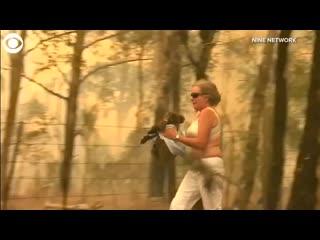 В Австралии женщина спасла коалу из пожара