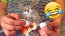 Я РЖАЛ ПОЛ ЧАСА  Смешные Коты и Собаки   ПРИКОЛЫ С ЖИВОТНЫМИ   Cute Cats