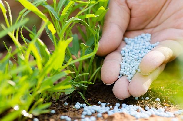 Если в почве не хватает фосфора, на достойный урожай не рассчитывайте