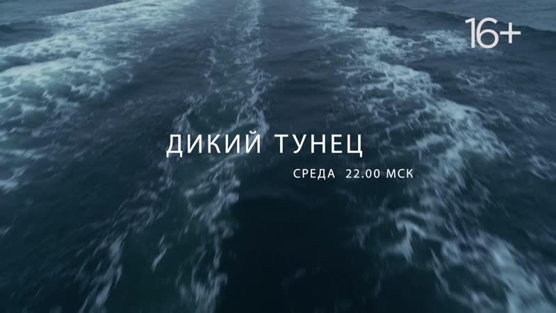 «Дикий тунец» | National Geographic