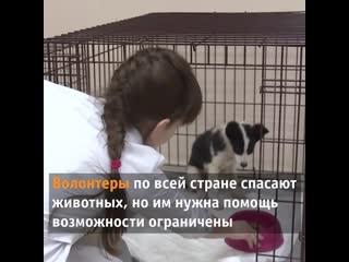Любишь животных Узнай как поправки в Конституцию помогут им