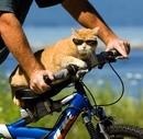 Юмор про велосипедистов - анекдоты афоризмы