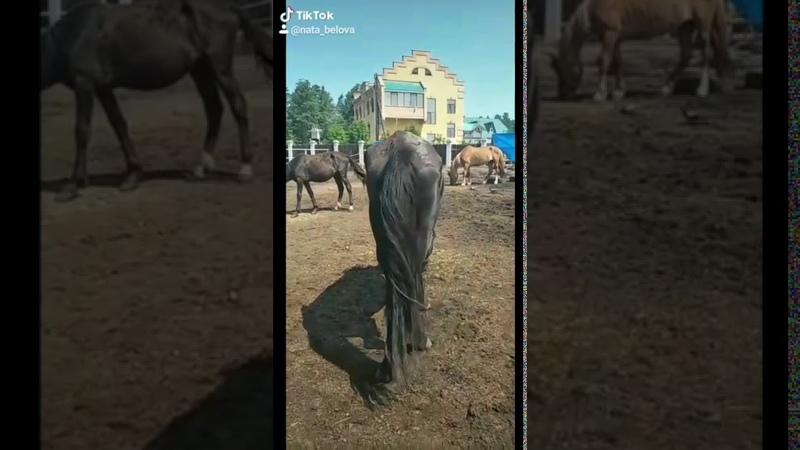 Лошадей морят голодом