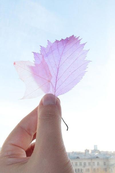Скелетирование листьев В сети популярен способ скелетирования листьев с помощью соды. Нужно сварить листья в растворе соды, а затем зубной щеткой удалять мякоть. Очень трудоемкий способ. Гораздо