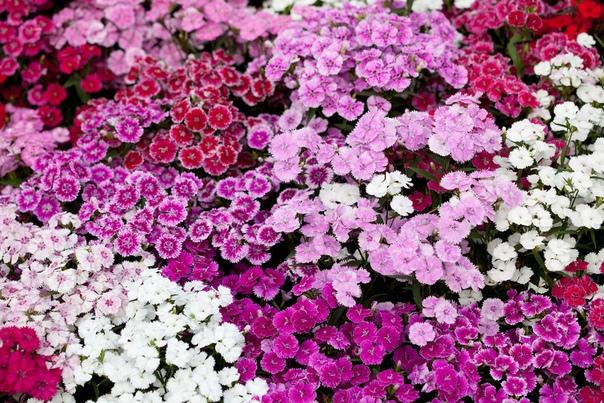 Как сделать ростостимулирующий раствор для растений