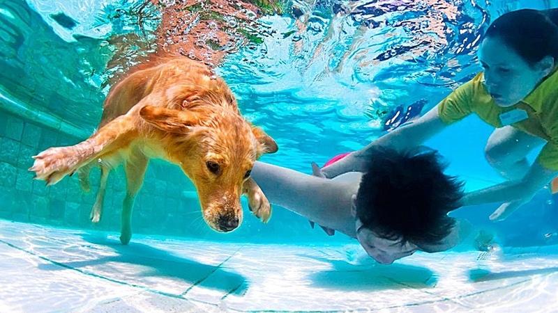 10 Невороятных Собак Которые Спасли Жизни Людей